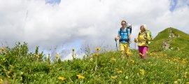 Wandern inmitten der Blumenpracht
