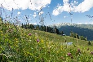 Blick zum Ifen von der Heuberg Bergstation