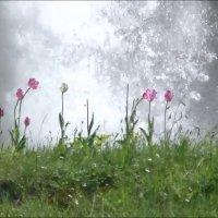 Tulpen am Stuibenfall
