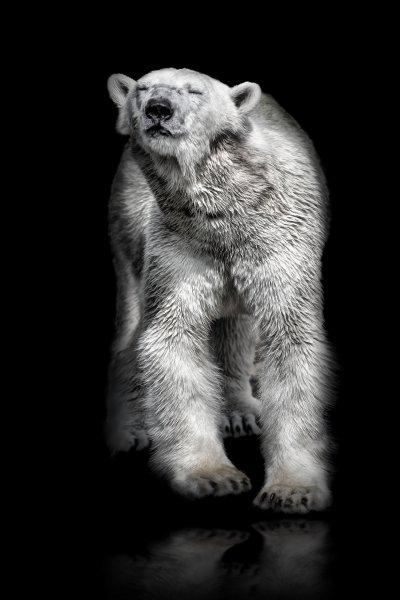 Eisbär - Katrin Zeidler