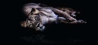 Löwenmama - Katrin Zeidler