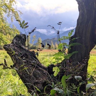 herbstlicher Baumstamm