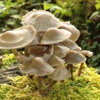 Pilze (2)