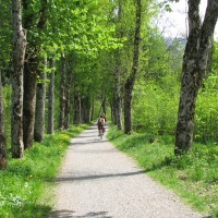 Im Rubinger Wald