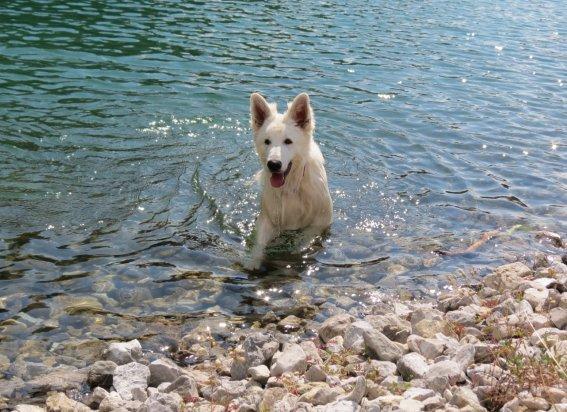 Hund Romy (1)
