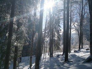 Winterwanderung Bergkristall (2)