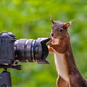 Oberstdorfer Fotogipfel - Frank-Fischer Tierfotografie 2 Key Visual 300px