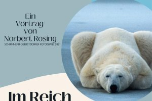 Plakat - Im Reich der Eisbären