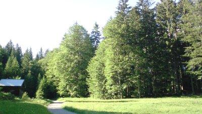 Edmund-Probst-Weg