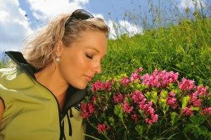 Fellhorn, Alpenrosenblühen, Wanderin