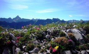Bergblumen Nebelhorn