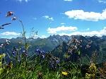 Bergblumenwiese am Fellhorn