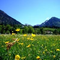 Frühlingswiese im Oberstdorfer Süden