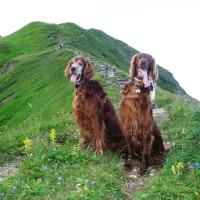 Yuka und Ashanti vom Fellhorngipfel zum Söllereck