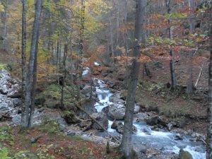 Herbstlicher Hölltobel