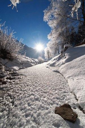 Rubi im Winter