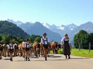 Viehscheid Schöllang Tourismus Oberstdorf (1)
