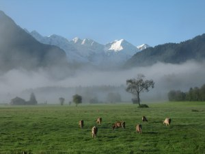 Öschwiesen im Nebel