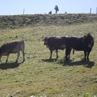 Kühe an der Station Schlappoldsee