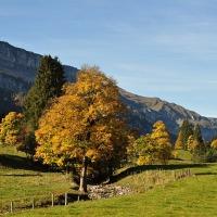 Rohrmoos im Herbst