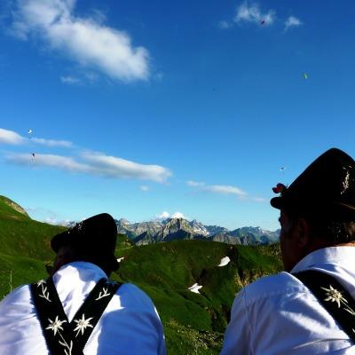 Edelweiss am Nebelhorn