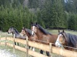Pferde bei Boxlers