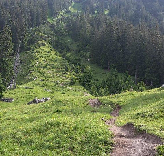 Aufstieg Rubihorn von der Seealpe