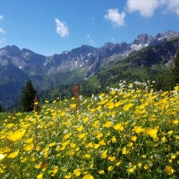 Blumenwiese am Fellhorn