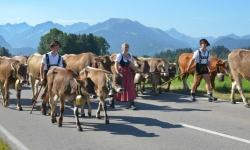 Viehscheid in Schöllang