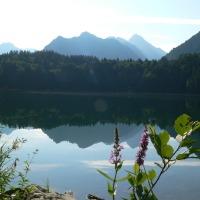 Freibergsee im Sommer