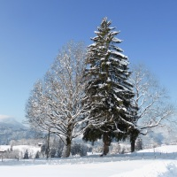 Winterspaziergang (2)