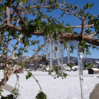 Winterspaziergang im April (26)