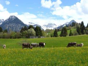 Kornau, Hintergrund die Berge des Oytals