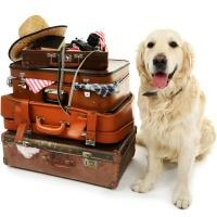 Hund mit Koffer