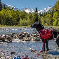 Hund im Fluss