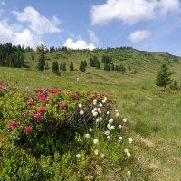 Bergtour auf den Piesenkopf (2)