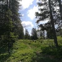Bergtour auf den Piesenkopf (4)