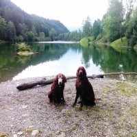 Am Auwaldsee