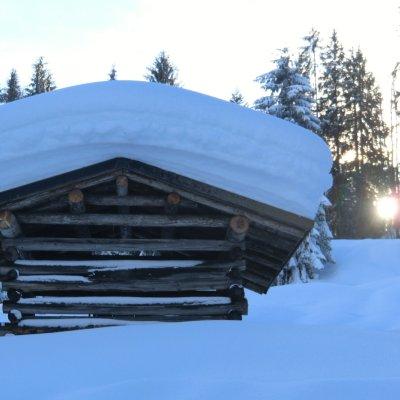 Tief verschneit (1)
