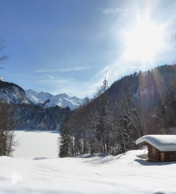 Winter Freibergsee  (5)