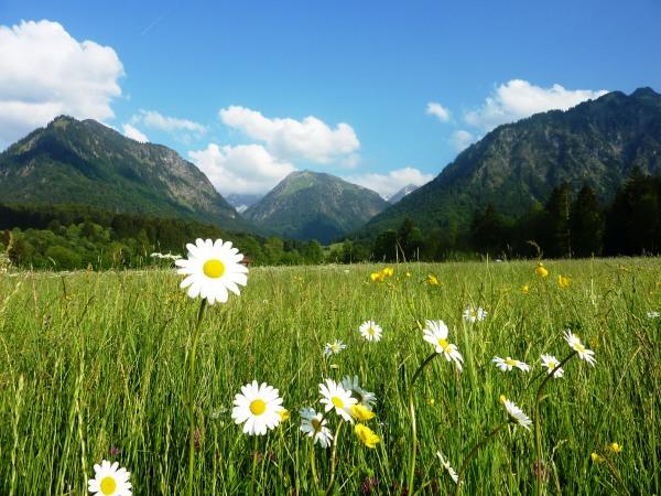 Blumenwiese im Süden Oberstdorfs