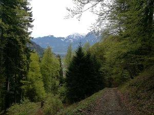 Weg auf den Geißberg