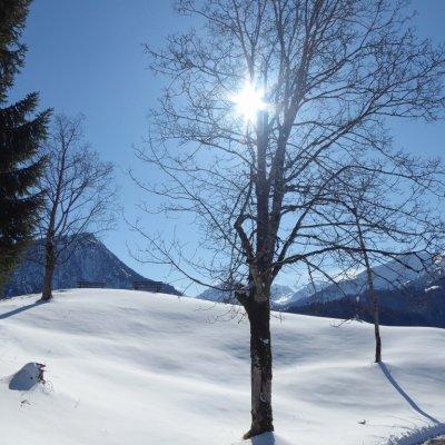 Wintersonne Nähe Moorweiher