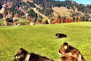 Unser Herbst - Tier und Natur kommen zur Ruhe...