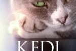 Kedi-von-katzen-und-menschen
