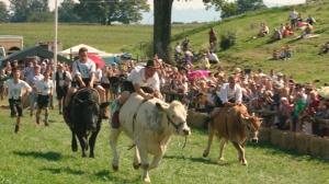 Ochsenrennen in Maising (2)-1