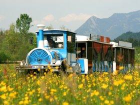 Alpenexpress in den Wiesen von Oberstdorf