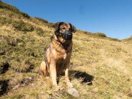 Für unsere Großkabinenbahnen brauchen Hunde einen Maulkorb