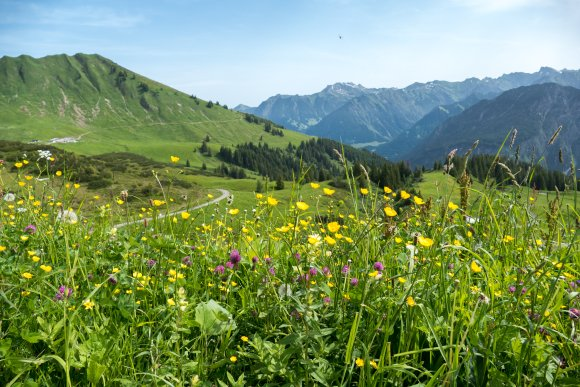 Sommertag am Fellhorn
