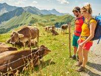 Tierische Wegbegleiter am Fellhorn